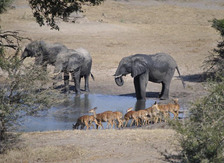 Tembe Elepant Park Visit at Utshwayelo Lodge