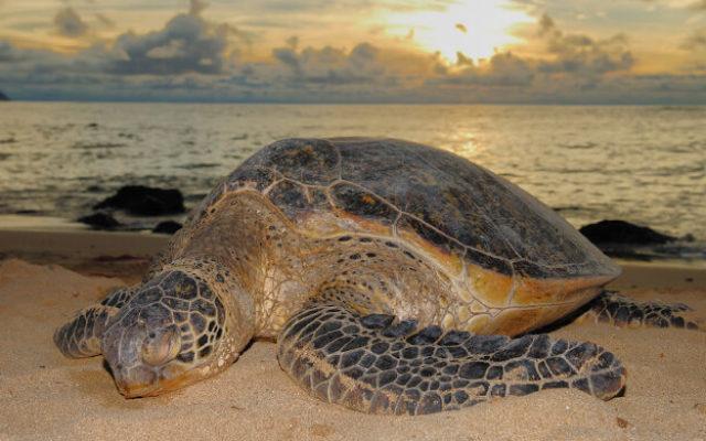 turtle viewing at kosi bay